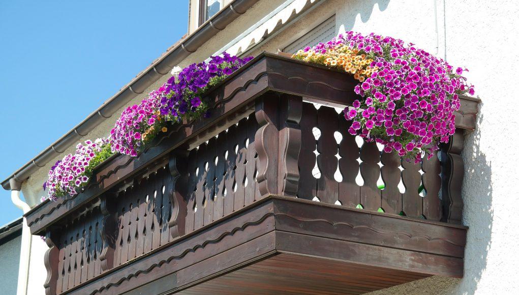 cveće za terase