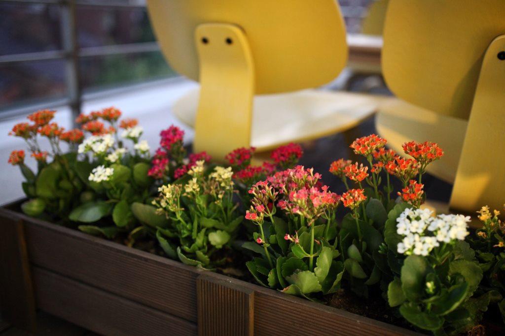 cveće u žardinjeri
